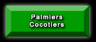 Palmiers Cocotiers