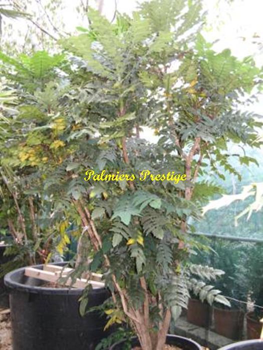 Plantes exotiques pour jardin et terrasse en vente chez for Plante pour terrasse hiver